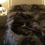 Main suite - someone appreciates all the hard work!
